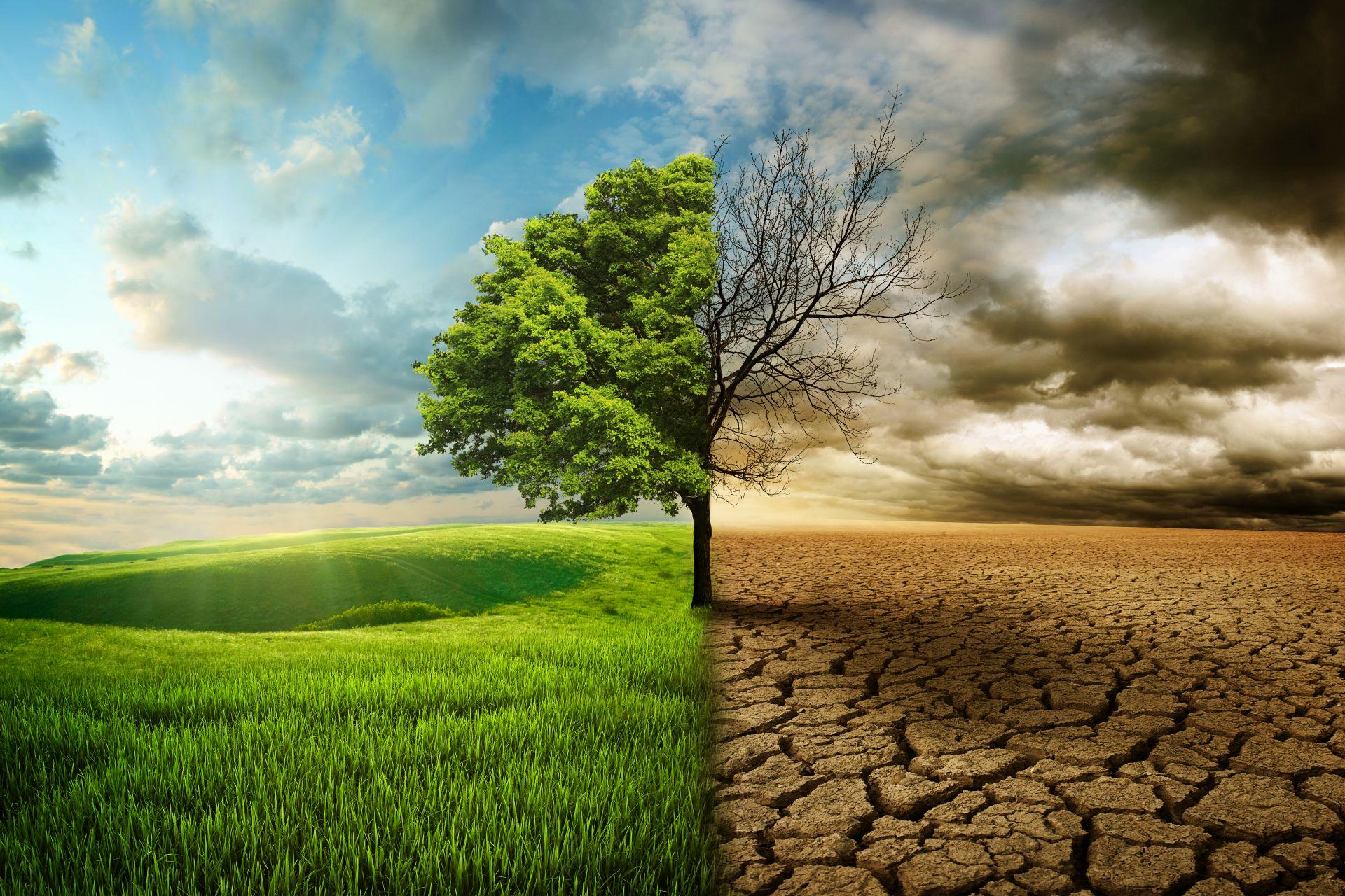 symboliczne zdjęcie przedstawiajace zmiany klimatu: po rawej wysuszona ziemia i uschnięte drzewo, a o lewej zielona trawa i zielone drzewo